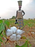 Fairer Handel mit Baumwolle