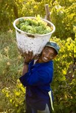 Fairer Handel mit Wein in Südafrika