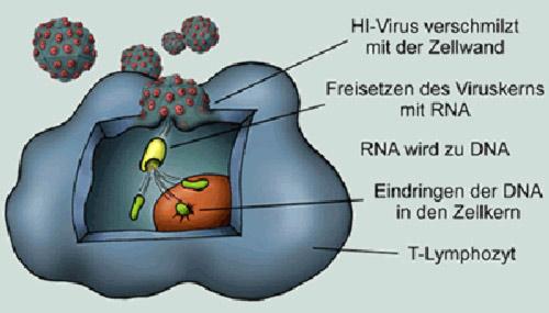 Genomübertragung